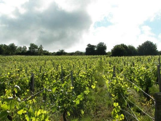 Chateau-Pouilly-vineyard